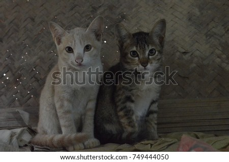 Two lovely kitten look at the camera with the dirty background