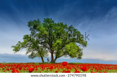 two lovers in poppy field - stock photo