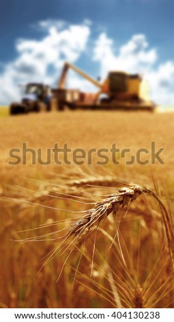 Two machines harvesting grain on a summer day