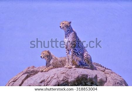 Two male cheetahs sitting on kopje,digital oil painting - stock photo