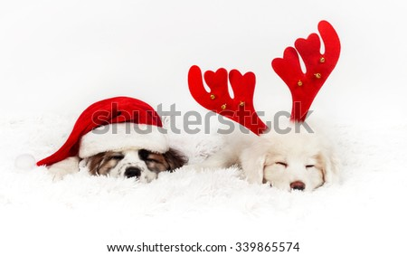 Two mastiff puppy dog with Santa Claus hat and reindeer diadem sleeping on the soft floor. Studio photography - stock photo