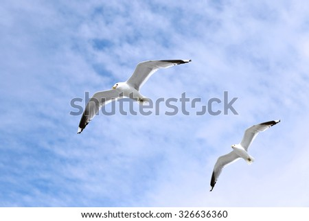 Two mediterranean white seagulls flying against the cloudy sky - stock photo