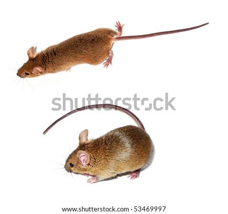 two mice - stock photo