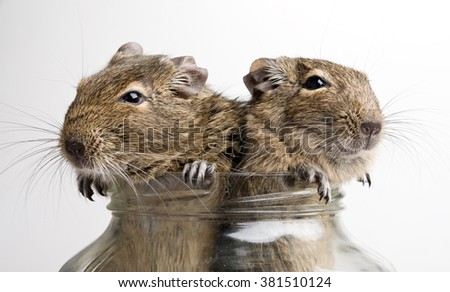 two mice in glass jar isolated on white - stock photo