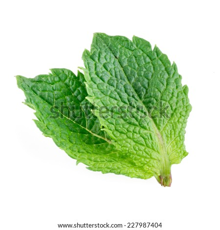 Two mint leaves isolated on white background - stock photo