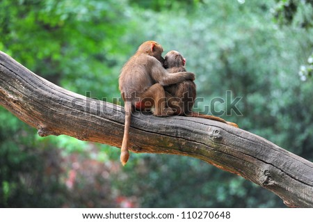 Two monkey friends on tree - stock photo
