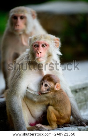 Two monkeys and their baby