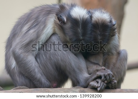 Two monkeys while holding their hands - stock photo