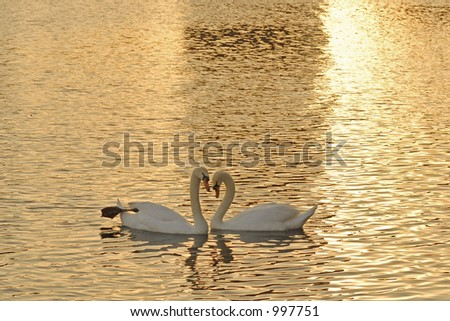 Two mute swans - stock photo