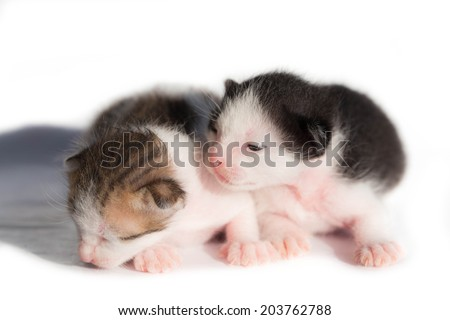 Two New born kitten.