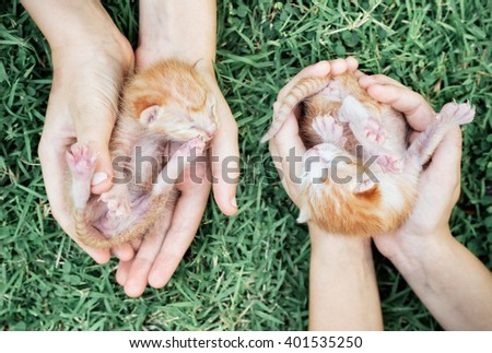Two newborn kittens in hands on green grass - stock photo
