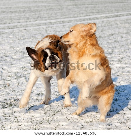 Dog Fighting Stock Photos, Illustrations, and Vector Art