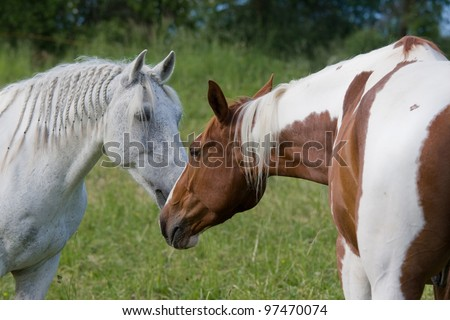 Two nice horses