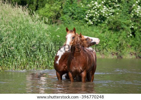 Two nice horses in the water - stock photo