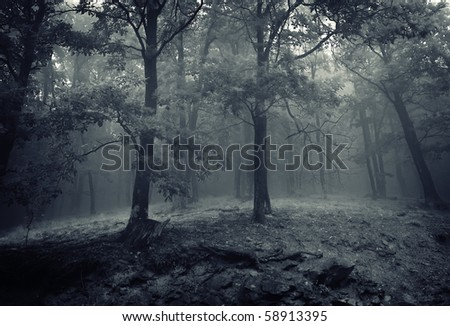 two oak trees in a beautiful forest with mist rising from ground at night - stock photo