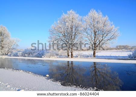 two oaks on coast river - stock photo