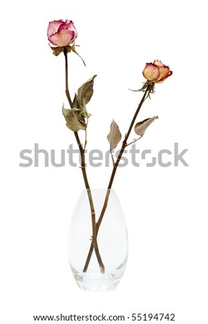 two of dried roses on a white background - stock photo