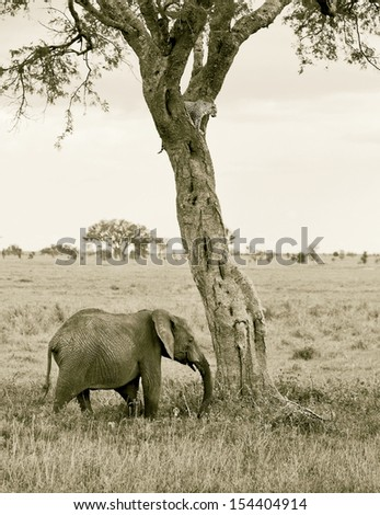Two of the leopard on a tree watching the herd of elephants in Serengeti Nature Reserve in Tanzania, Africa (stylized retro) - stock photo