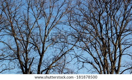 Two old trees in spring - stock photo