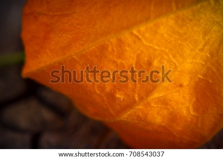Two orange flowers of Phys-alis on an old wooden surface