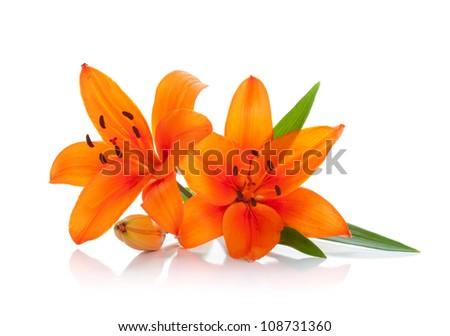 Two orange lily. Isolated on white background - stock photo