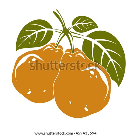 Two orange simple pears with green leaves, ripe sweet fruits illustration. Healthy and organic food, harvest season symbol.  - stock photo
