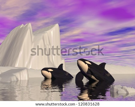 Two orcas swimming among icebergs by cloudy weather - stock photo