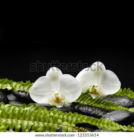 Two orchid and stones with set of green fern - stock photo
