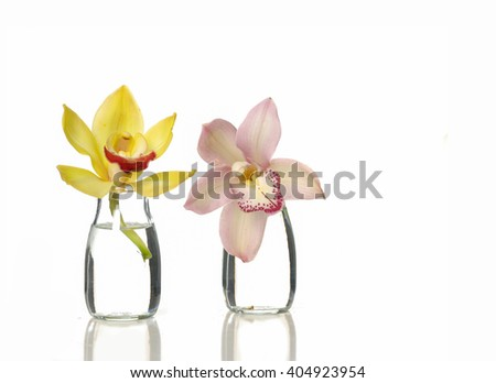 Two Orchids in vase - stock photo