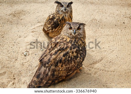 two owls - stock photo
