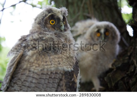 Two owls on the tree - stock photo