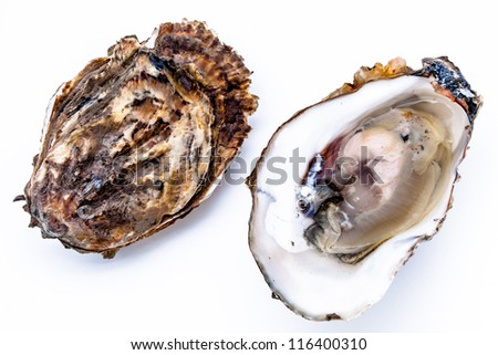 Two oysters on a wihte background - stock photo