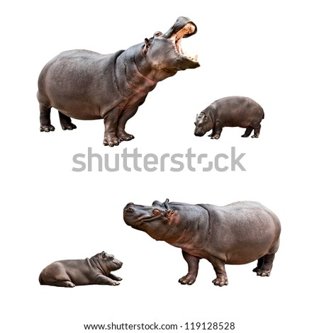Two pairs of family hippos and babes with different emotions - stock photo