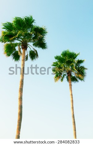 two palm tree in blue sky, retro toned