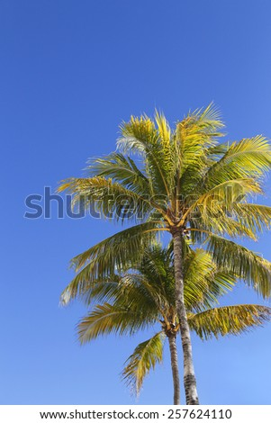 Two palm trees against a blue sky, in Miami beach, Florida.