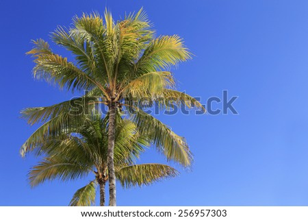 Two Palm trees against a blue sky. Miami beach, Florida.