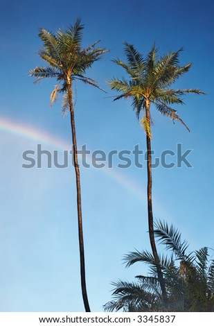Two palm trees and rainbow in blue sky near Victoria Waterfall, Zimbabwe
