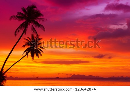 beach sunset with palm trees. two palm trees silhouette on sunset tropical beach with w