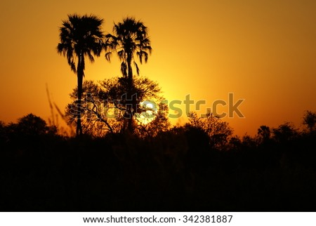 Two palm trees silhouetted against the setting sun in the Okavango Delta