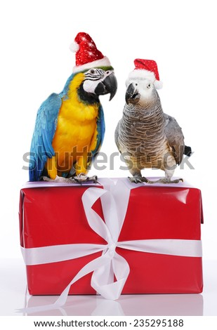 Two parrots on a Christmas gift with santa hat - stock photo