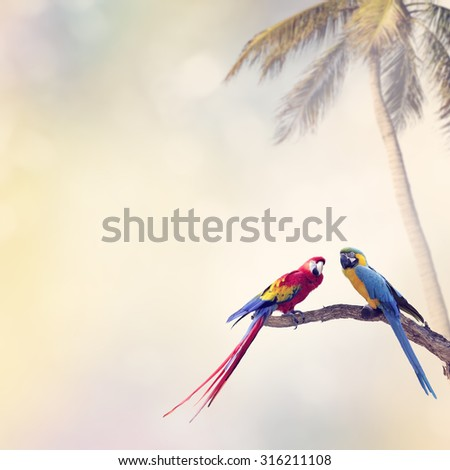 Two Parrots Perch on a Log - stock photo