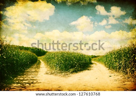 Two paths in the corn field. Grunge and retro style. - stock photo