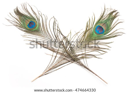 Two peacock feathers isolated on white
