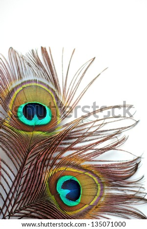 Two peacock feathers on a white background - stock photo