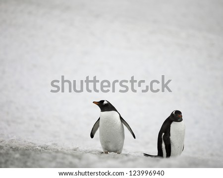 Two penguins on a snow - stock photo