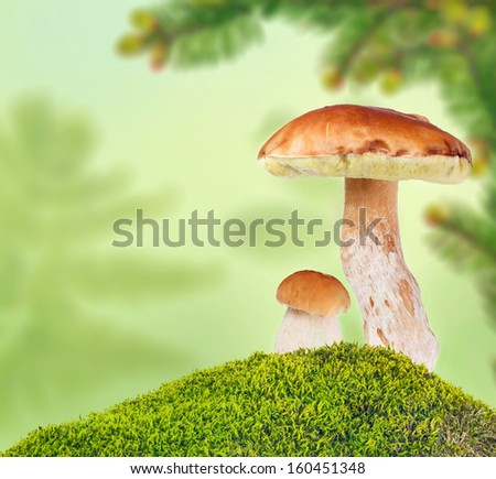 two penny buns in green moss on light background