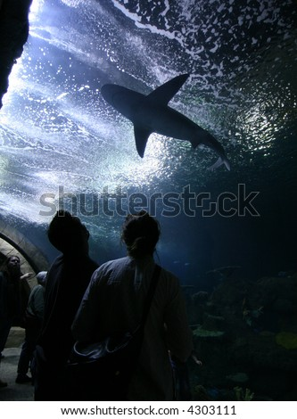 two people and the shark