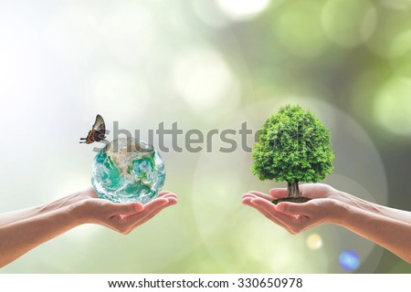 Two people human hands holding/ saving growing tree of knowledge on soil eco bio green globe w/ butterfly clean CSR ESG environment on blur natural background: Element of this image furnished by NASA  - stock photo