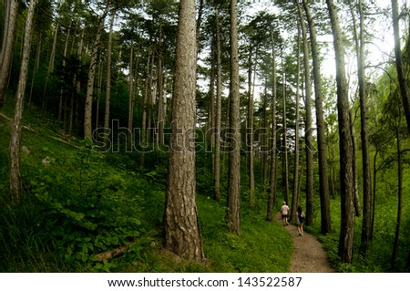 Two people walk down a path in an Austrian Forest