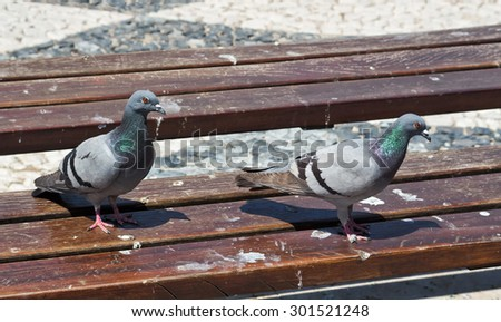 Two pigeons look around on a dirty park bench. - stock photo